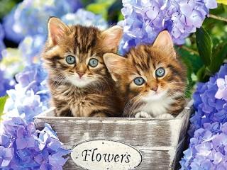 Собирать пазл Котята и цветы онлайн