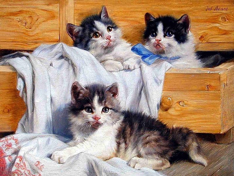 Пазл Собирать пазлы онлайн - Котята играют