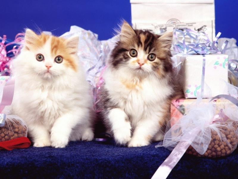 Пазл Собирать пазлы онлайн - Котята с подарками