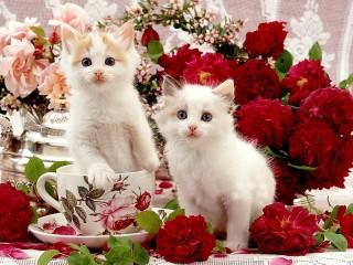 Собирать пазл Котята в розах онлайн