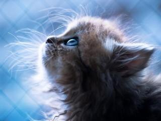 Собирать пазл Котёнок Дейзи онлайн