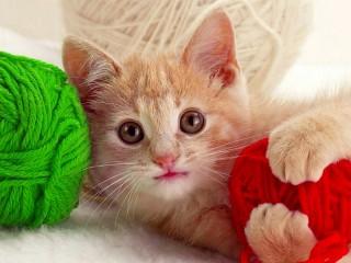 Собирать пазл Котёнок и клубки онлайн