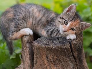 Собирать пазл Котёнок на пне онлайн