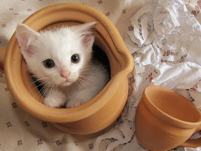 Пазл Собирать пазлы онлайн - Котёнок в горшочке
