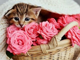 Собирать пазл Котёнок в корзине онлайн
