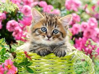 Собирать пазл Котёнок в саду онлайн