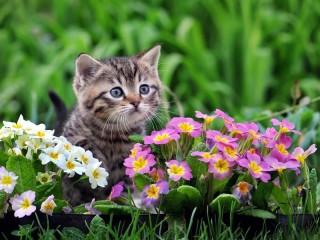 Собирать пазл Котёнок в цветах онлайн