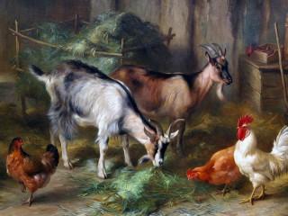 Собирать пазл Козы и куры онлайн