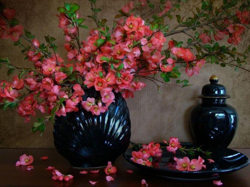 Пазл Собирать пазлы онлайн - Красивые цветы