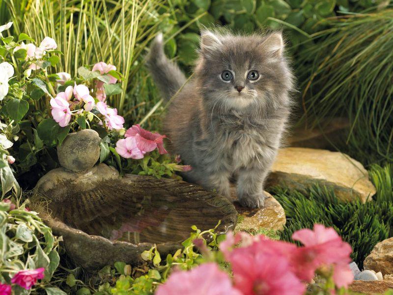 Пазл Собирать пазлы онлайн - Красивый котенок