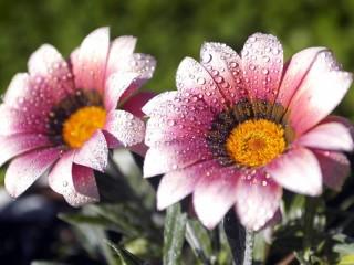Собирать пазл Красивый цветочек онлайн