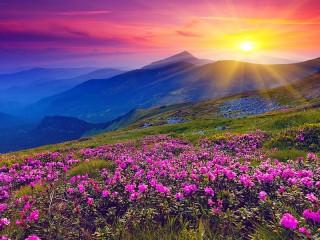 Собирать пазл Красивое поле онлайн
