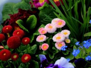 Собирать пазл Краски весны онлайн