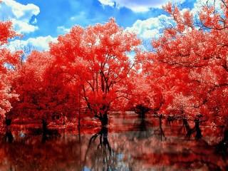 Собирать пазл Красная осень онлайн