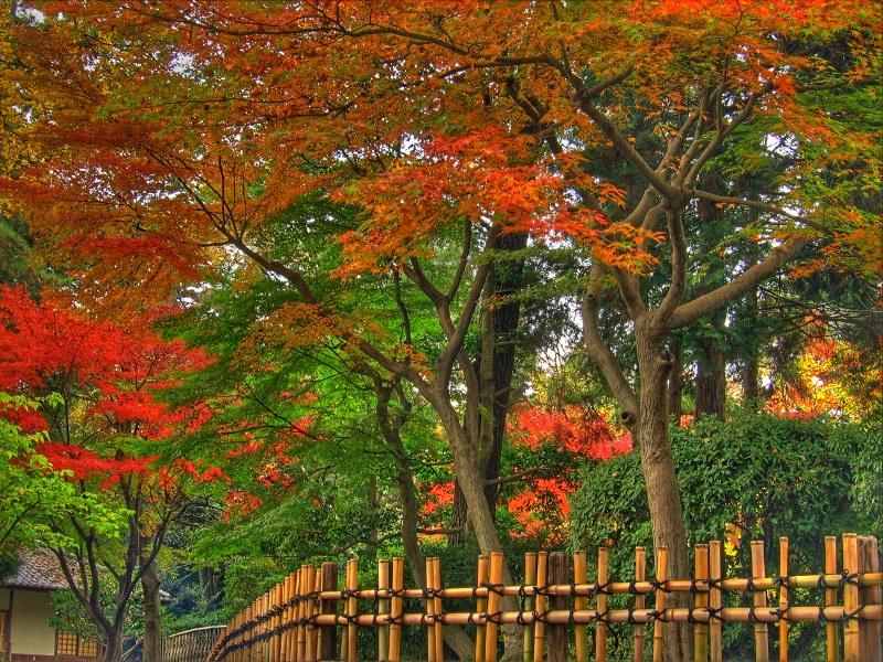 Пазл Собирать пазлы онлайн - Красные листья