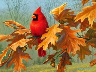 Собирать пазл Красный кардинал онлайн