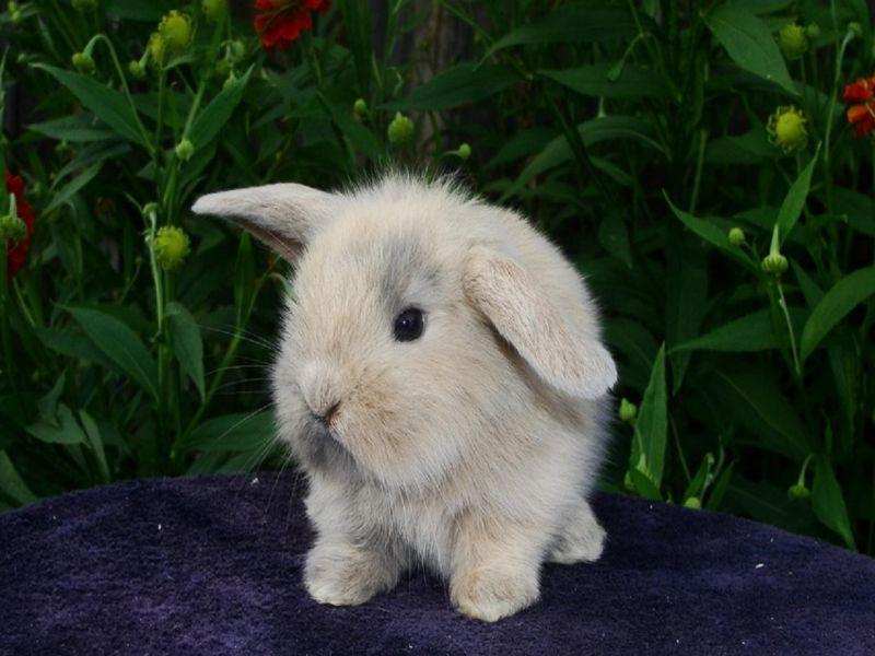 Пазл Собирать пазлы онлайн - Крольчонок