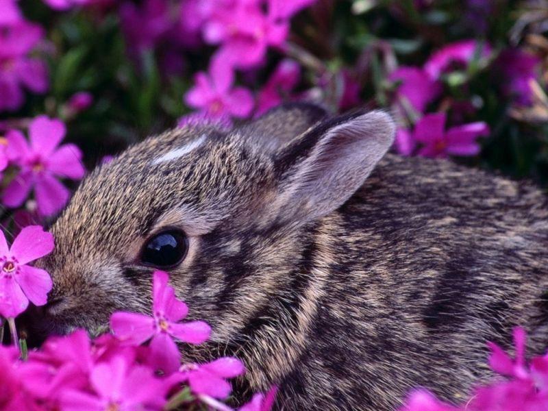 Пазл Собирать пазлы онлайн - Кролик