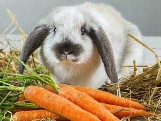 Собирать пазл Кролик онлайн