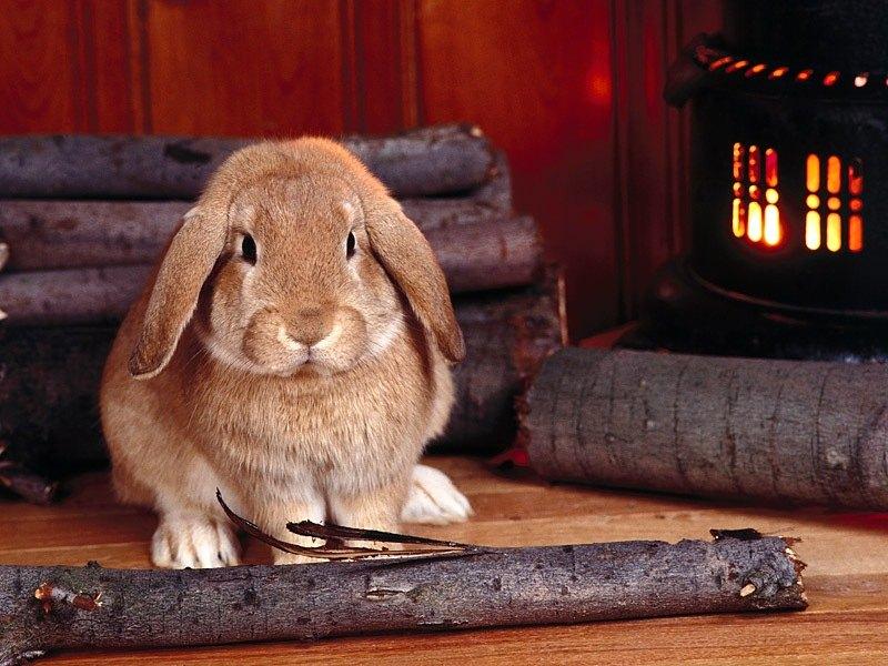Пазл Собирать пазлы онлайн - Кролик у огня