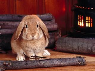 Собирать пазл Кролик у огня онлайн