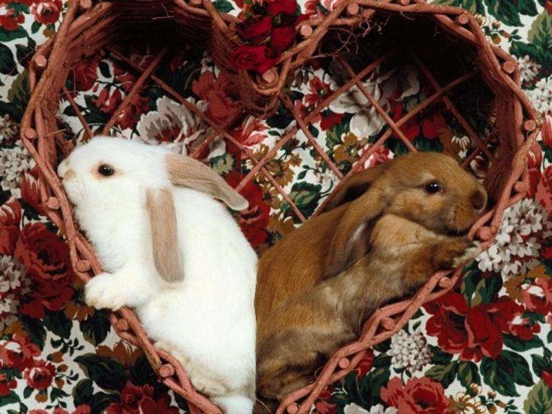 Пазл Собирать пазлы онлайн - Кролики в корзине
