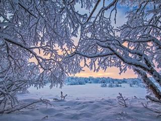 Собирать пазл Кружевная зима онлайн