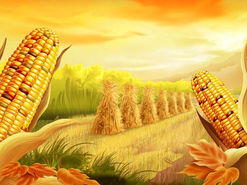 Пазл Собирать пазлы онлайн - Кукуруза