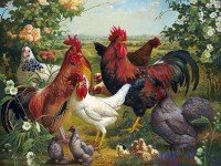 Собирать пазл Куриное семейство онлайн