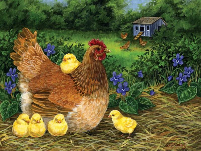Пазл Собирать пазлы онлайн - Курица с цыплятами