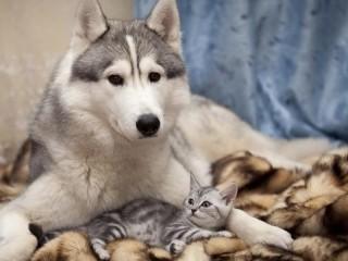 Собирать пазл Лайка и кот онлайн