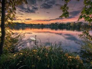 Собирать пазл Лебедь на озере онлайн