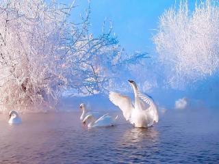 Собирать пазл Лебединая зима онлайн