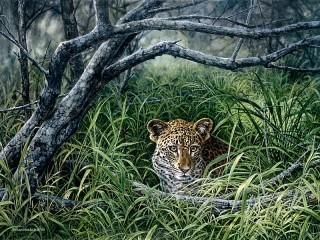 Собирать пазл Леопард онлайн
