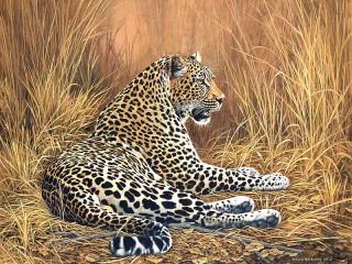 Собирать пазл Леопард отдыхает онлайн