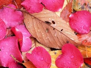 Собирать пазл Лепестки и листья онлайн