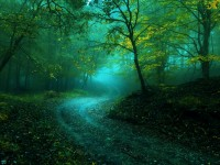 Собирать пазл лес онлайн