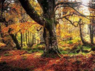 Собирать пазл Лес осенью онлайн