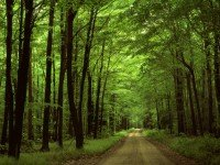 Собирать пазл Лесная дорога онлайн