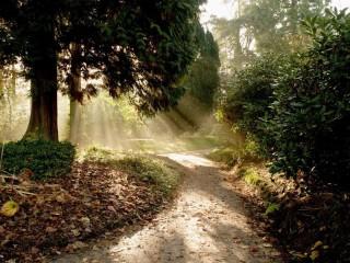 Собирать пазл Лесная тропинка онлайн