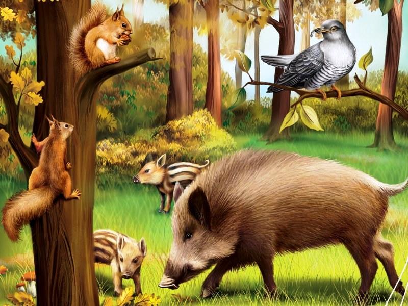 Картинка леса для детей с животными