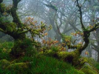 Собирать пазл Лесной мох онлайн