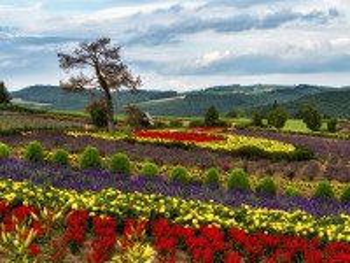 Собирать пазл Летние цветы онлайн