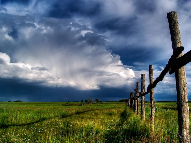Пазл Собирать пазлы онлайн - Поле и небо