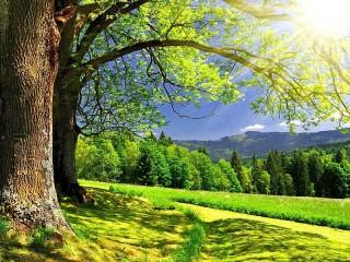 Собирать пазл Летний пейзаж онлайн