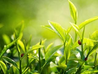 Собирать пазл Трава и насекомые  онлайн