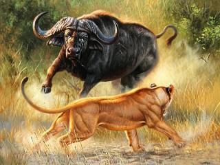 Собирать пазл Лев и буйвол онлайн