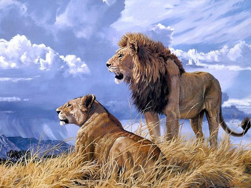 Пазл Собирать пазлы онлайн - Лев и львица