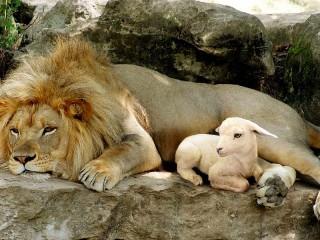 Собирать пазл Лев и ягнёнок онлайн
