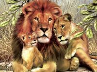Собирать пазл Лев львица львенок онлайн